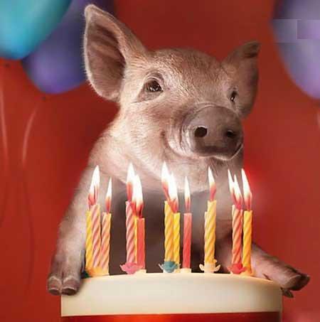 Поросёнка с днём рожденья или рождения поздравления